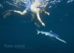 my beautiful baby blue - playing with the free divers! by Fiona Ayerst